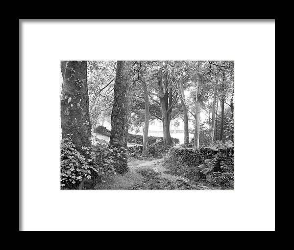 Framed Print featuring the photograph Woods, Troutbeck, Windermere by Iain Duncan