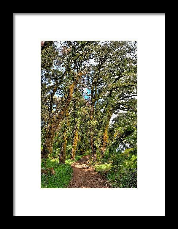 Framed Print featuring the photograph Woodsy Trail by Paul Owen