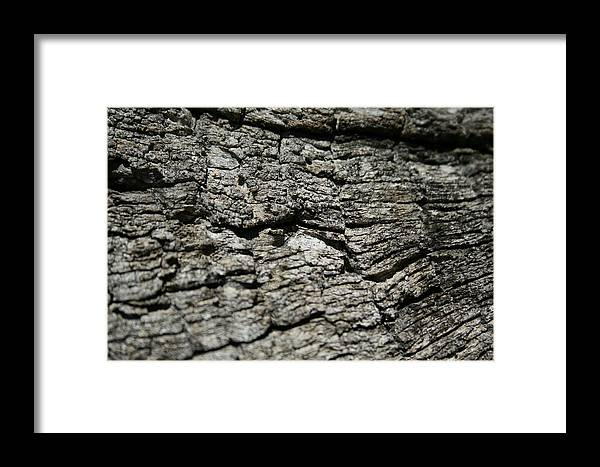 Woody Framed Print featuring the photograph Woody by Joshua Sunday