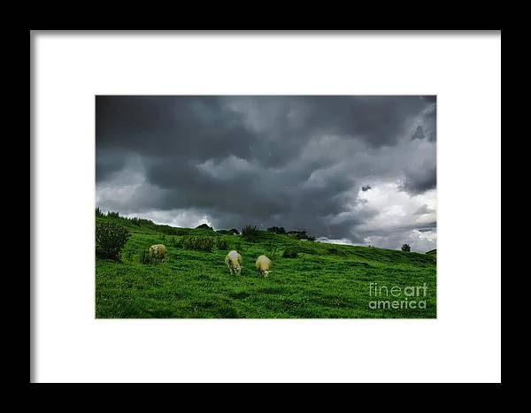 Northumberland Framed Print featuring the photograph Woolies by John Kenealy