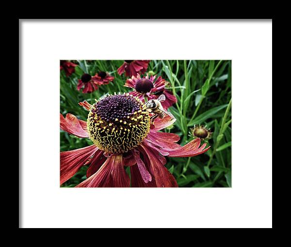 Color Framed Print featuring the photograph Work Work Work by Karen Stahlros