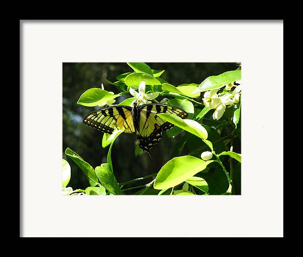 Landscape Framed Print featuring the photograph Working With Less by Gloria Byler