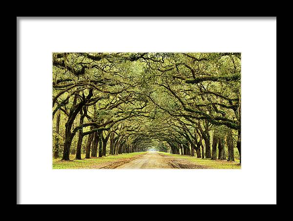 Wormsloe Framed Print featuring the photograph Wormsloe by Sherry Adkins