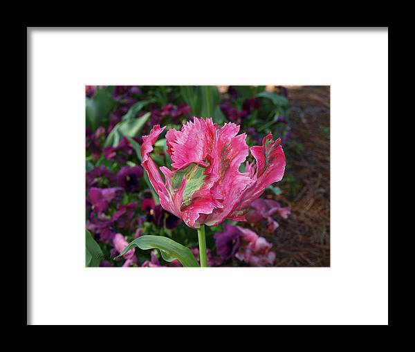 Blooming Framed Print featuring the photograph Wow by Judy Waller