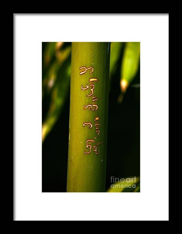 Bamboo Framed Print featuring the photograph Written Bamboo 01 by April Holgate