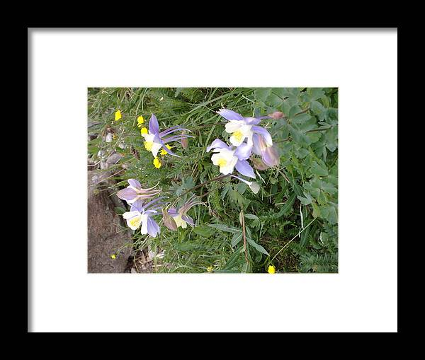 Wyoming High Country In Spring Framed Print featuring the photograph Wyoming Spring by Alice Eckmann