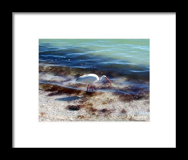 Bird Framed Print featuring the photograph Yay Seaweed by Elizabeth Klecker