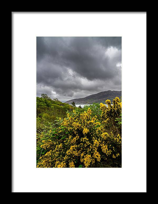 Clouds Framed Print featuring the photograph Yellow Flowers And Grey Clouds, Stormy Weather Over Sea In Scotland. by Ineke Mighorst