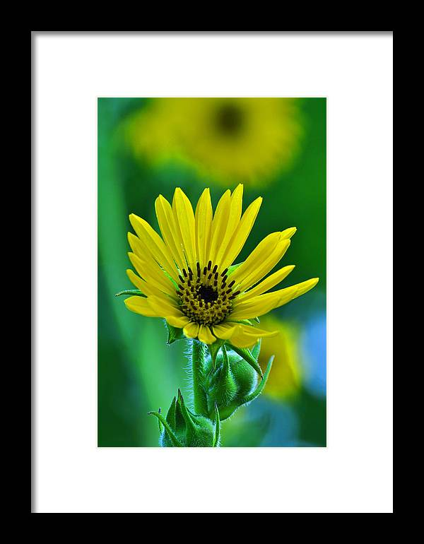 Flower Framed Print featuring the photograph Yellow And Green 2 by Peter McIntosh