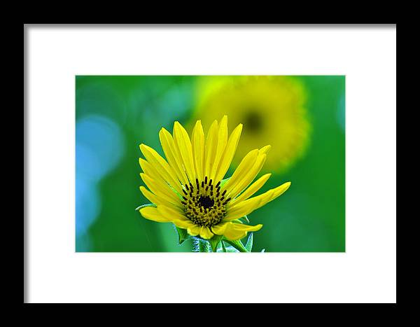 Flower Framed Print featuring the photograph Yellow And Green by Peter McIntosh
