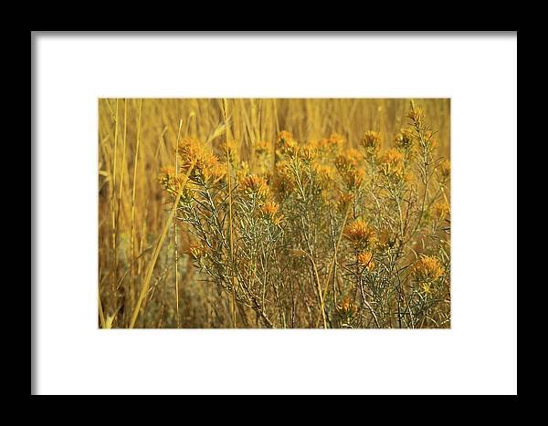 Yellow Framed Print featuring the photograph Yellow Autumn Blooming by Calyse Knox