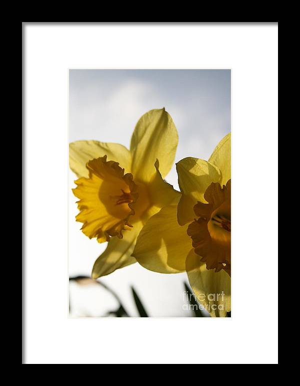 Flower Framed Print featuring the photograph Yellow Beauty by Valia Bradshaw