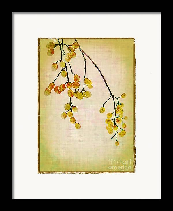 Yellow Framed Print featuring the photograph Yellow Berries by Judi Bagwell