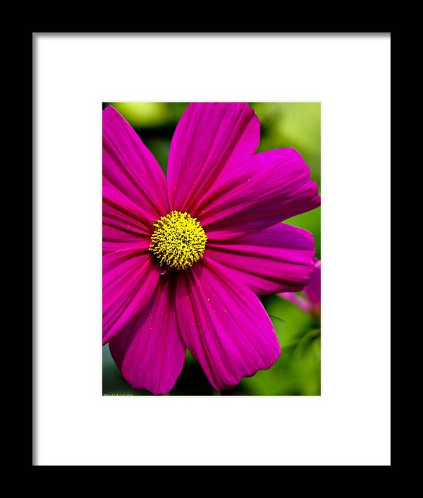 Flower Framed Print featuring the photograph Yellow Center by Ches Black
