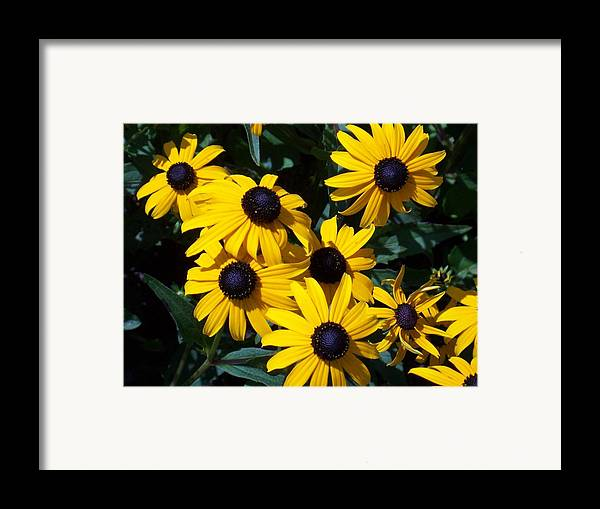 Yellow Flowers Framed Print featuring the photograph Yellow Daisies by Ellen B Pate
