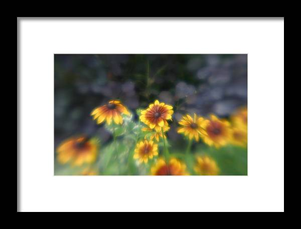 Framed Print featuring the photograph Yellow Daisies In Monets Garden by Jennifer McDuffie