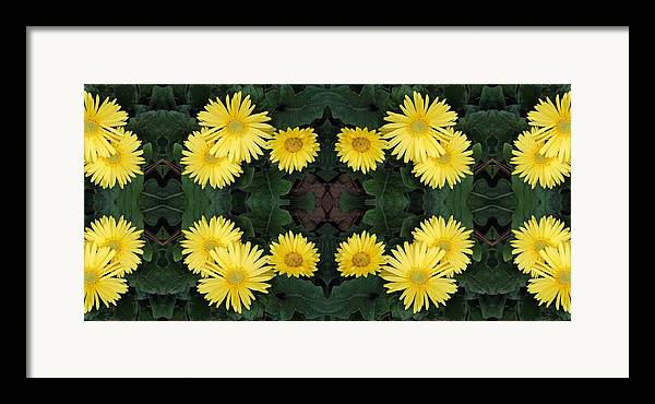 Yellow Framed Print featuring the photograph Yellow Daisy by Keri Renee