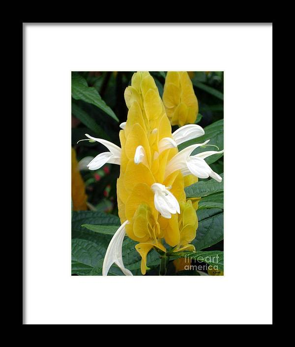 Flower Framed Print featuring the photograph Yellow Eruption by Shelley Jones