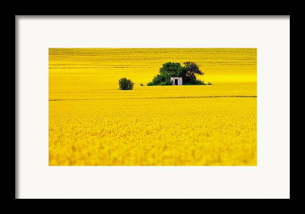 Field Framed Print featuring the photograph Yellow by Evgeni Dinev