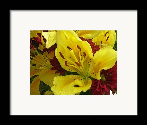 Yellow Iris Framed Print featuring the photograph Yellow Floral by Nancy Ferrier