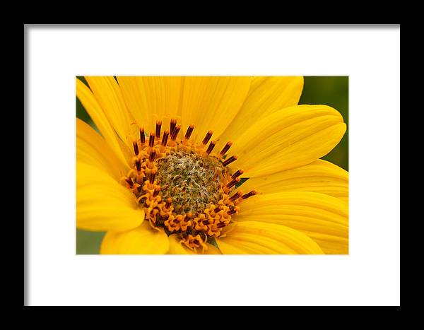 Flower Framed Print featuring the photograph Yellow Flower by Clint Stussi