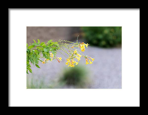 Yellow Framed Print featuring the photograph Yellow Flower by Daniel Seok