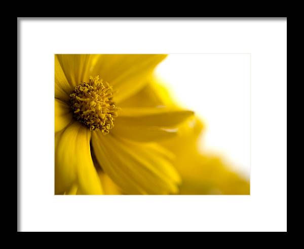 Flower Framed Print featuring the photograph Yellow Flower by Jessica Wakefield