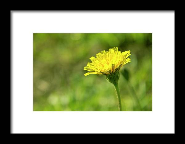 Flower Framed Print featuring the photograph Yellow Flower by Nikos Stavrakas