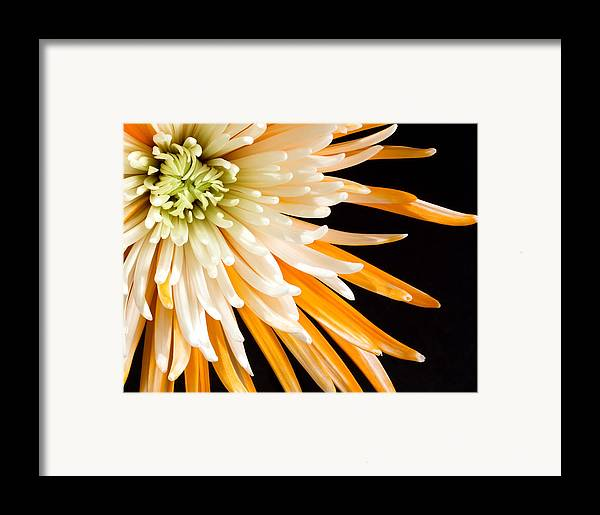 Flower Framed Print featuring the photograph Yellow Flower On Black by Al Mueller