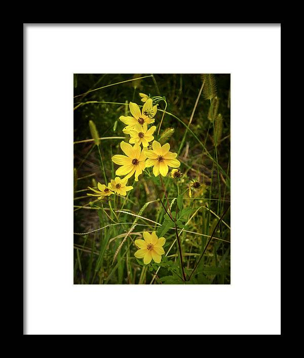 Vertical Framed Print featuring the photograph Yellow Flowers by Robert Meyerson