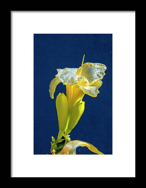 Yellow Framed Print featuring the photograph Yellow Glue Blue #f9 by Leif Sohlman