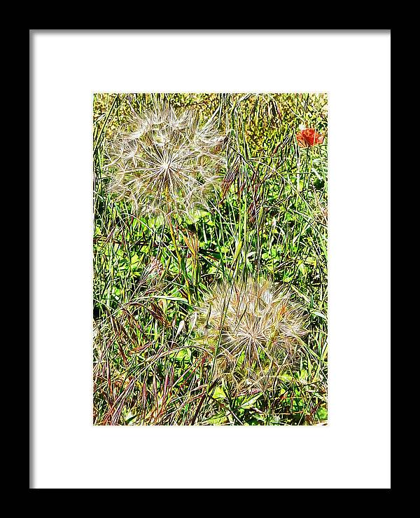 Flora Framed Print featuring the photograph Yellow Goats Beard 2 by Dorothy Berry-Lound