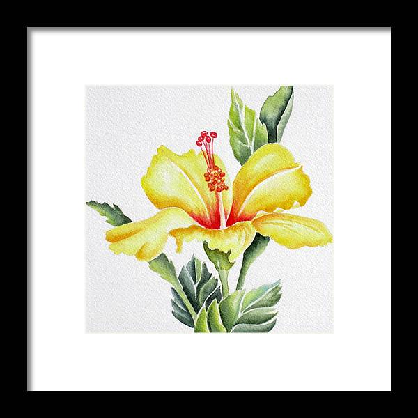 Hibiscus Framed Print featuring the painting Yellow Hibiscus by Deborah Ronglien