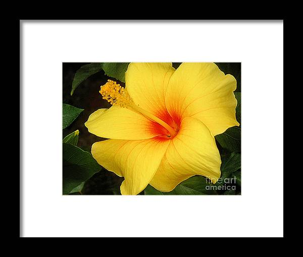 Nature Framed Print featuring the photograph Yellow Hibiscus by Lucyna A M Green