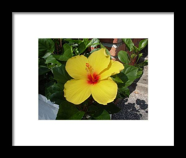 Flower Framed Print featuring the photograph Yellow Hibiscus Shadows by Warren Thompson