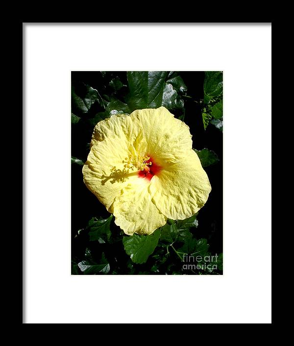 Flower Framed Print featuring the photograph Yellow Hibiscus The Hawaiian State Flower by Chandelle Hazen