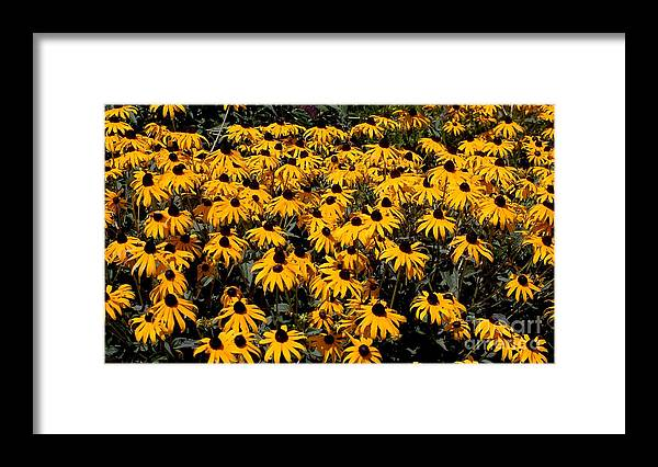 Digital Photo Framed Print featuring the photograph Yellow is the color of ..... by David Lane