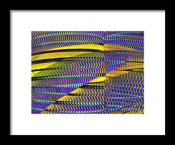 Yellow Jacket Framed Print featuring the photograph Yellow Jacket by Ron Bissett