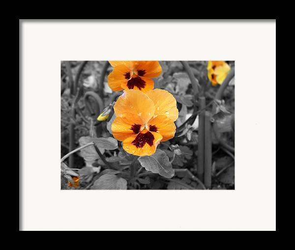 Flower Framed Print featuring the photograph Yellow by Jessica Burgett