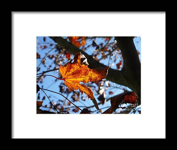 Autumn Framed Print featuring the photograph Yellow Leaf 1 by Jeff Breiman