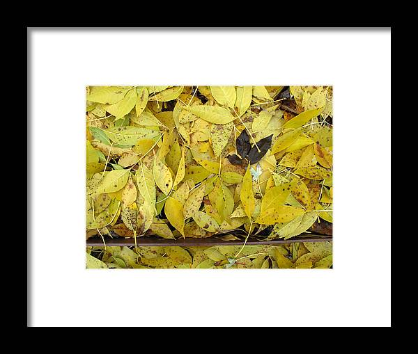 Yellow Framed Print featuring the photograph Yellow Leaves On The Ground by Lyle Crump