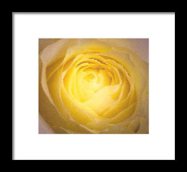 Yellow Framed Print featuring the photograph Yellow by Magda Levin-Gutierrez