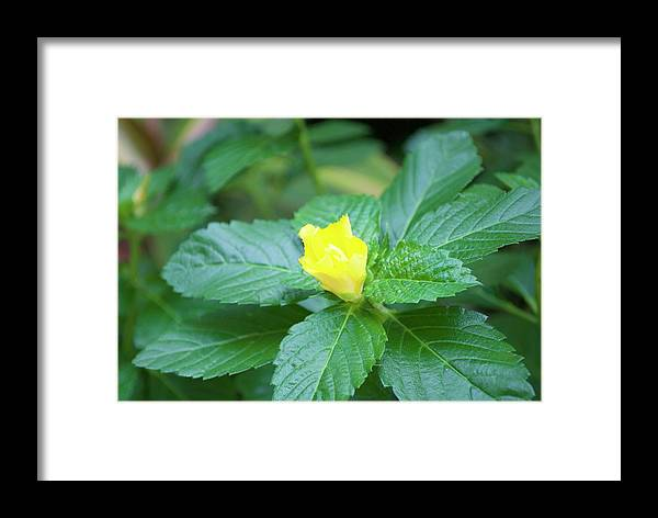 Yellow Framed Print featuring the painting Yellow by Margaret Fronimos