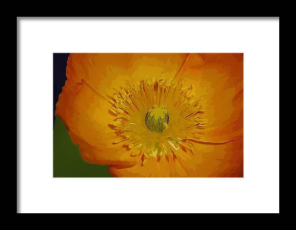 Poppy Framed Print featuring the photograph Yellow Poppy by Donna Bentley