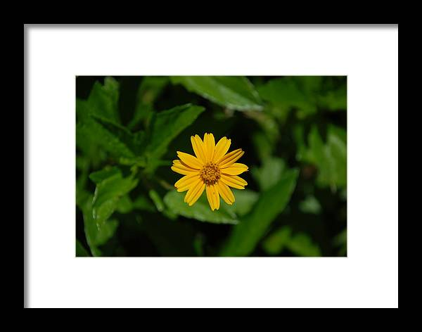 Macro Framed Print featuring the photograph Yellow by Rob Hans
