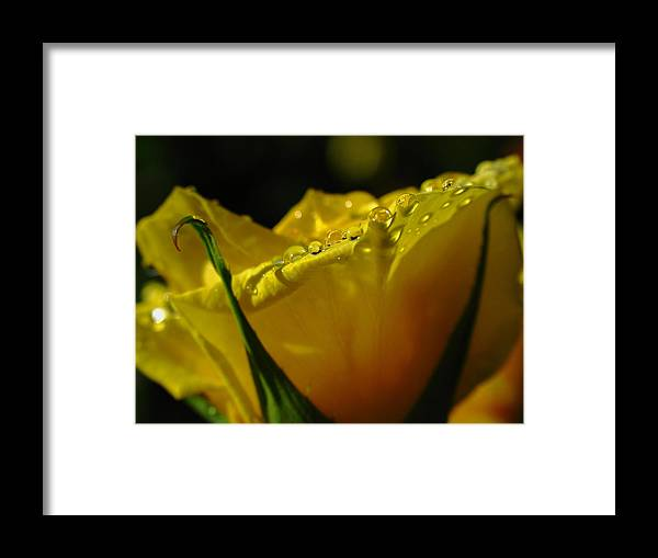 Rose Framed Print featuring the photograph Yellow Rose by Juergen Roth