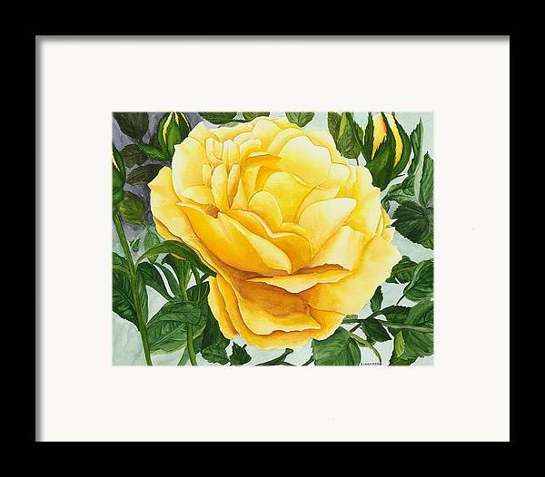 Yellow Rose Watercolor Painting Framed Print featuring the painting Yellow Rose by Robert Thomaston