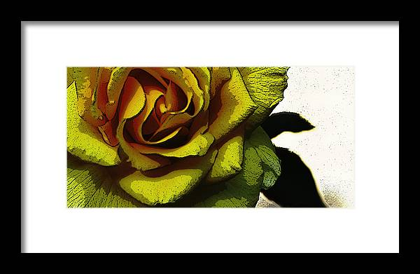 Yellow Rose Framed Print featuring the photograph Yellow Rose by Thomas Duffy