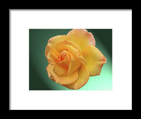 Yellow Framed Print featuring the photograph Yellow by Tim Coleman