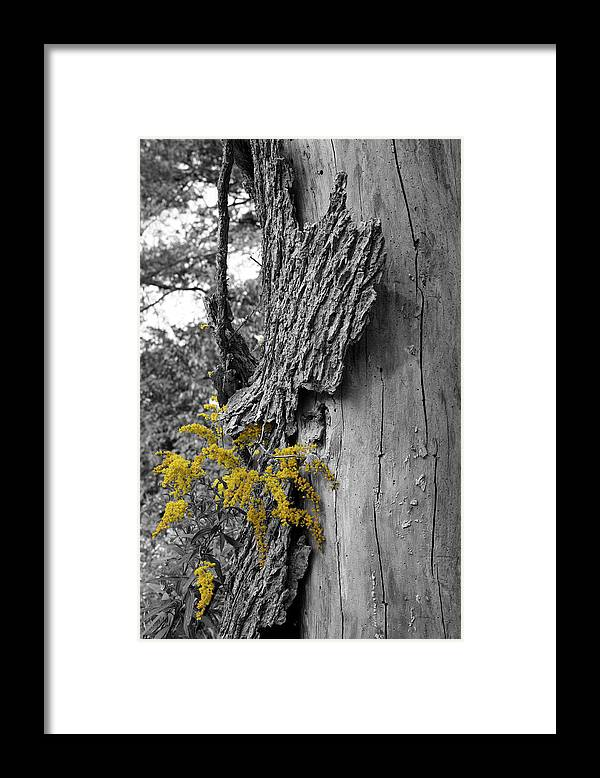 Bark Framed Print featuring the photograph Yellow Tufts by Dylan Punke